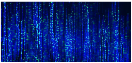 High-resolution fluorescent image of linear DNA molecule