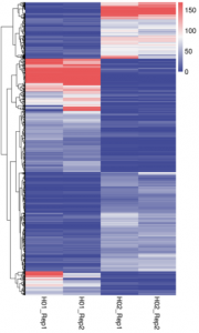 Hierarchical clustering heatmap on DI value of  differential TAD boundary