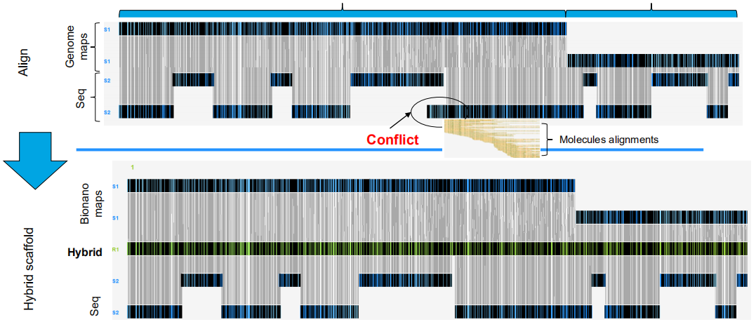 Hybrid-scaffolding NGS sequence assembly with Bionano maps (Liu J et al., Genome Biology.2020)
